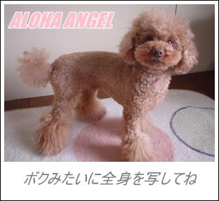 Pooh_001_blog300225