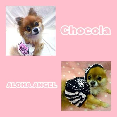 2009_09_chocola01
