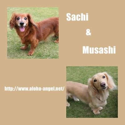 2009_10_sachi_musashi